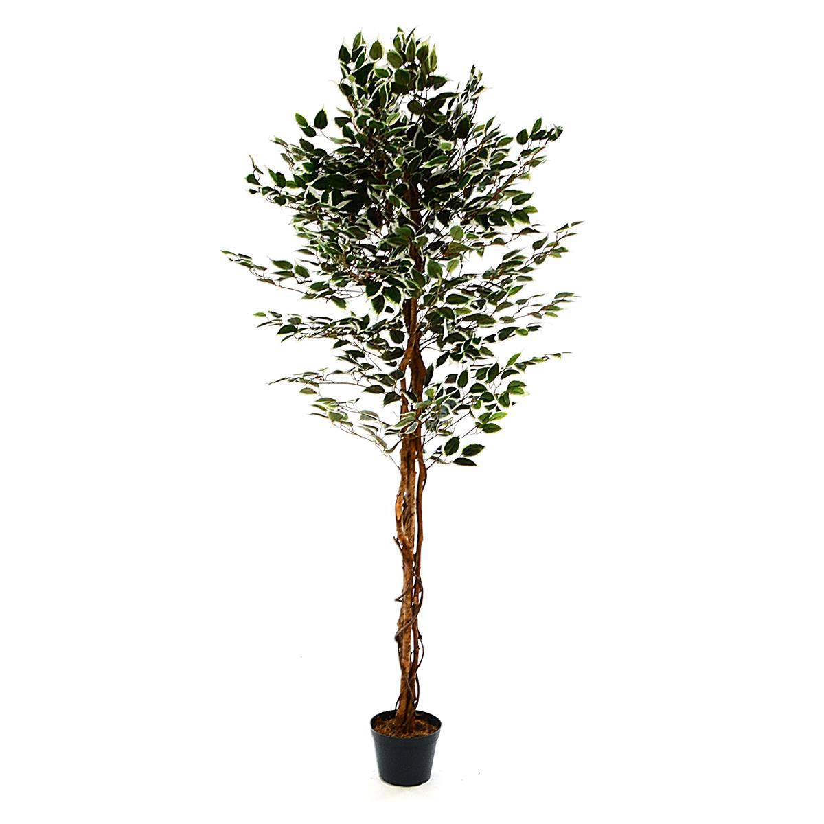 Ficus Benjamin Kunstpflanze Kunstbaum mit Echtholz-Stamm H 185 cm grün-weiß